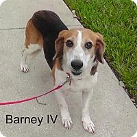 Adopt A Pet :: Barney IV - Tampa, FL