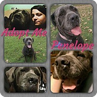 Adopt A Pet :: Penelope - Cheney, KS
