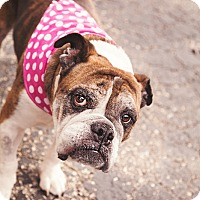 Adopt A Pet :: Sadie - Columbus, OH