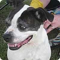 Adopt A Pet :: Tina Marie - Alexandria, VA