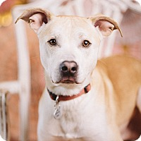 Adopt A Pet :: Baker - Portland, OR
