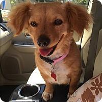 Adopt A Pet :: Donna - Encino, CA
