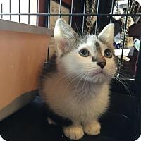 Adopt A Pet :: Wilson - Herndon, VA