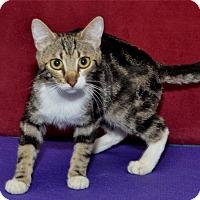 Adopt A Pet :: Melanie - Lenexa, KS