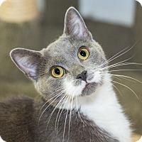 Adopt A Pet :: Elmer - Seville, OH