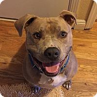 Adopt A Pet :: Stryker - Los Angeles, CA