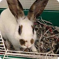 Other/Unknown for adoption in Peoria, Illinois - RAISIN