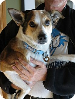 Border Collie Mix Dog for adoption in Corning, California - RANGO
