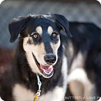 Adopt A Pet :: Aspen - Salt Lake City, UT