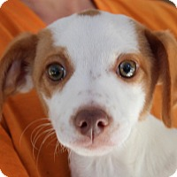 Adopt A Pet :: Maybe Baby - Harmony, Glocester, RI