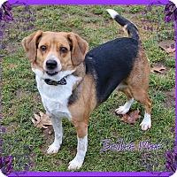 Adopt A Pet :: Bailee Mae - Shippenville, PA