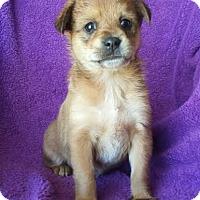 Adopt A Pet :: Viola - santa monica, CA