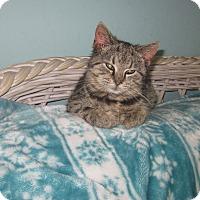 Adopt A Pet :: Lucy - Myrtle Beach, SC