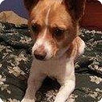 Adopt A Pet :: RAFIKI - Hampton, VA