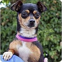 Adopt A Pet :: Posie - Santa Barbara, CA