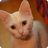 Adopt A Pet :: Chamomile - Brooklyn, NY