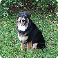 Adopt A Pet :: Molly - Columbia, SC