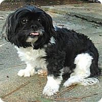 Adopt A Pet :: Mandy - Mooy, AL