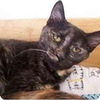 Adopt A Pet :: Margene - El Cajon, CA