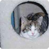 Adopt A Pet :: Amber - Hamburg, NY