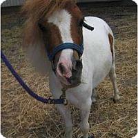 Adopt A Pet :: Kiwi - Dewey, IL