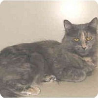 Adopt A Pet :: Grace - Mesa, AZ