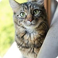 Adopt A Pet :: Margo - Addison, IL