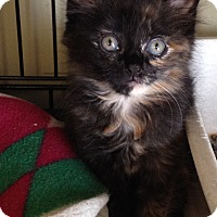 Adopt A Pet :: Pebbles - Island Park, NY