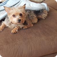 Adopt A Pet :: Molly - West Deptford, NJ