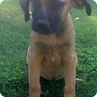 Adopt A Pet :: Johnny - North Brunswick, NJ