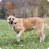 Adopt A Pet :: Nigella - Greeneville, TN