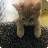 Adopt A Pet :: Butters - Mission Viejo, CA