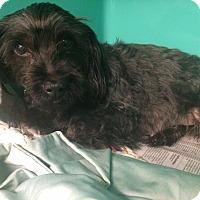 Adopt A Pet :: Trudy - Oak Ridge, NJ