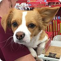 Adopt A Pet :: JJ - Tucson, AZ