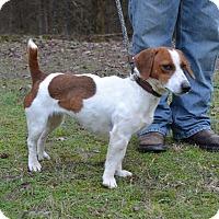 Adopt A Pet :: Shorty - Charlemont, MA