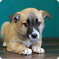Adopt A Pet :: Karrie - Waldorf, MD