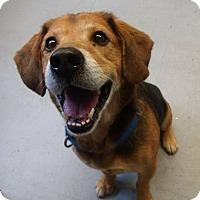 Adopt A Pet :: Craven - Glocester, RI
