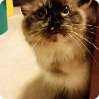 Adopt A Pet :: Kimiko - Dahlgren, VA