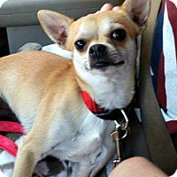 Adopt A Pet :: Mako - Chesapeake, VA