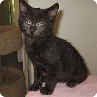 Adopt A Pet :: Tango - Monticello, IA