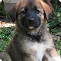 Adopt A Pet :: Sid - Kyle, TX