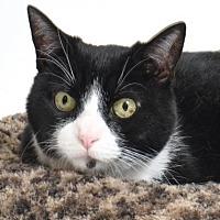 Adopt A Pet :: Minka - Roseville, CA