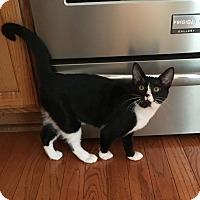 Adopt A Pet :: Money Penny - Colmar, PA