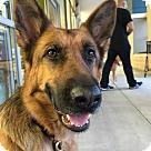 Adopt A Pet :: Ryka 4203
