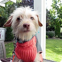 Adopt A Pet :: Nina - Boise, ID