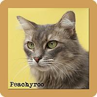 Adopt A Pet :: Peachyroo - Aiken, SC