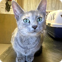 Adopt A Pet :: Willow - Fredericksburg, VA