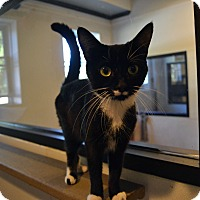 Adopt A Pet :: Glenda - Broadway, NJ