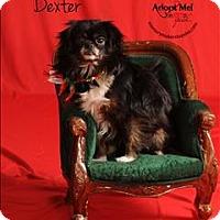 Adopt A Pet :: Dexter - Topeka, KS