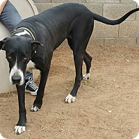 Adopt A Pet :: Jordan - Phoenix, AZ